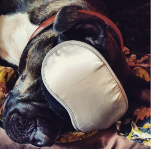 Even pups can use a good sleep mask.